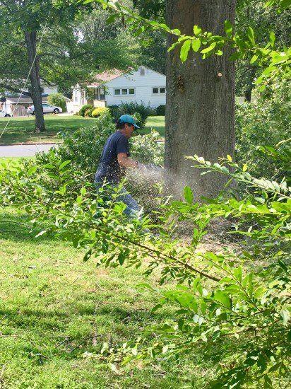 tree removal san jose